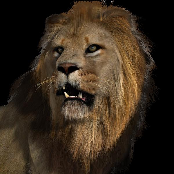 Le lion - Voir le roi lion ...